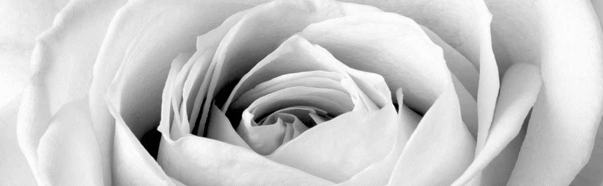 Black and white photo of the centre of a rose